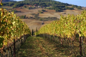with scuola toscana activities, you can visit wineries in Chianti